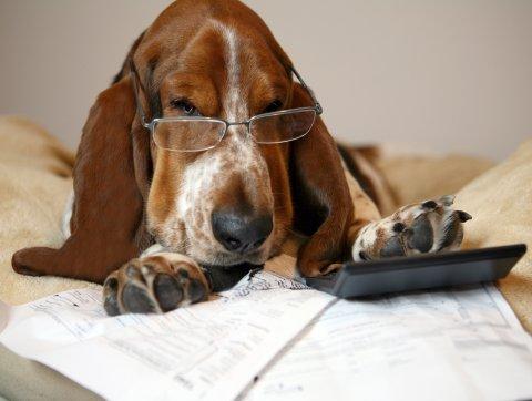 Tax season, dog image