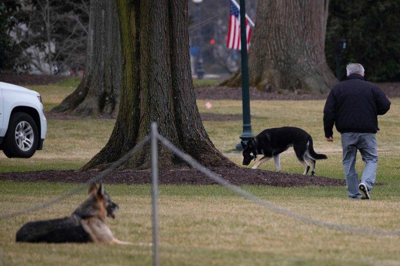 Biden dogs Major Champ White House 2021