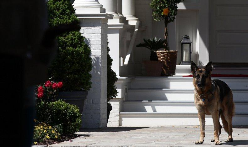 Joe Biden dog Champ 2012
