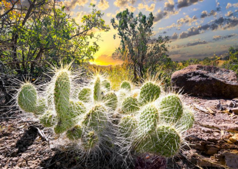 New Mexico: Los Alamos