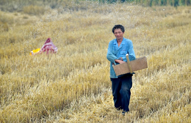 Chinese farmer in 2015