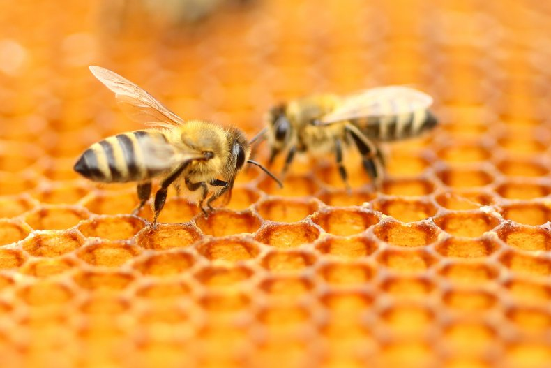 A couple of honey bees