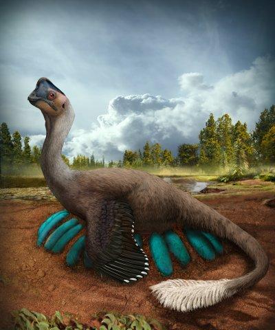 Dinosaur, science, dinosaur eggs, fossils