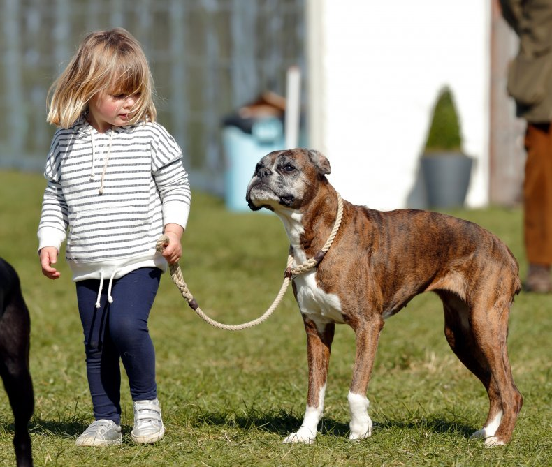 Boxers are famed for their loyalty