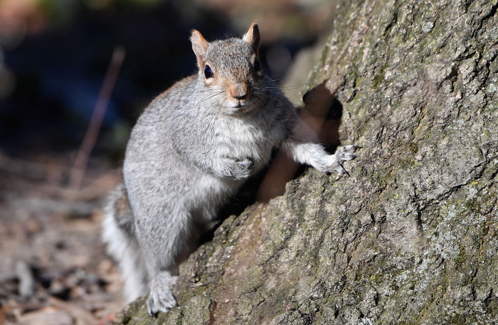Squirrel caught stealing Amazon parcel from doorstep