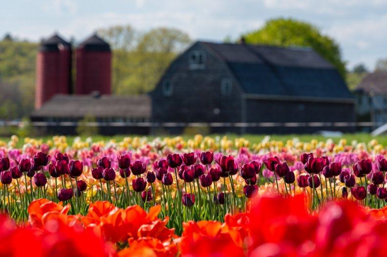 Rhode Island farm