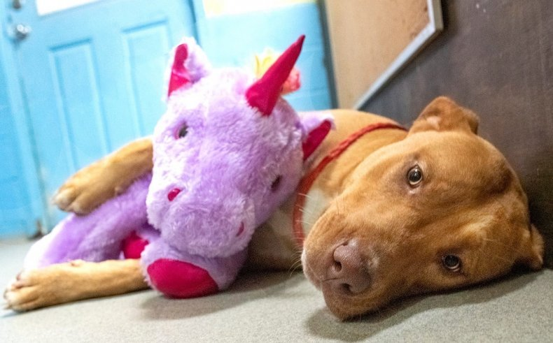 Stray Dog Who Went Viral For Repeatedly Stealing Purple Unicorn Finds a Home