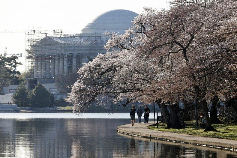 Cherry blossom trees in Washington, D.C.