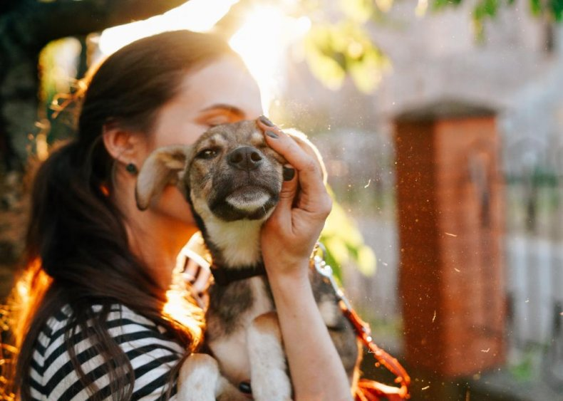 Pet adoption laws by state