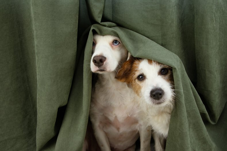 Two dogs hiding