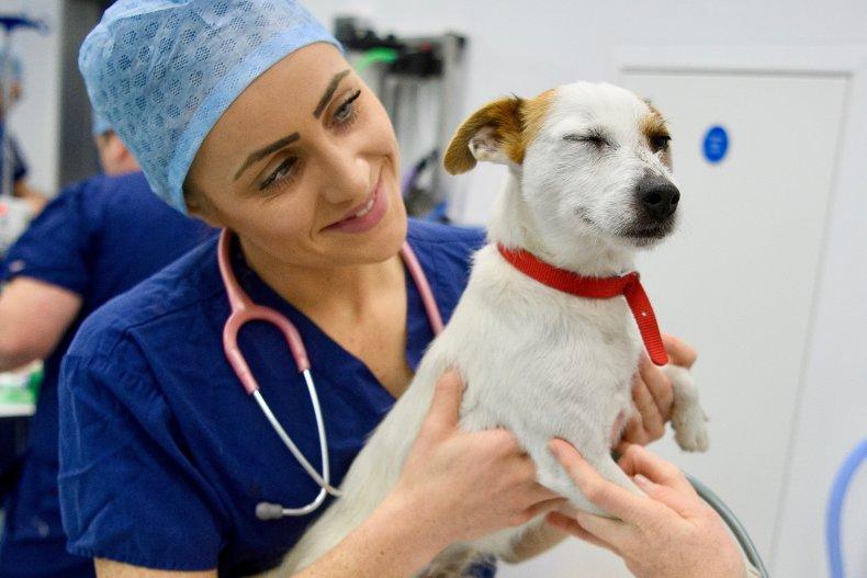 COVID vaccine animals