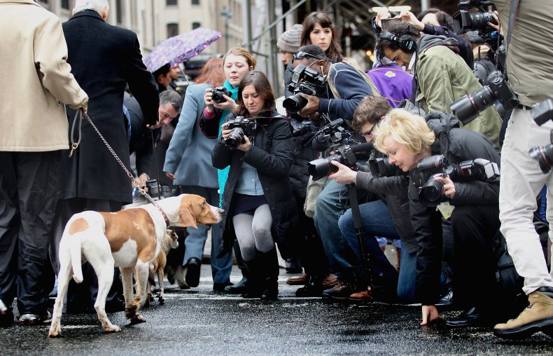 American English coonhound in NYC