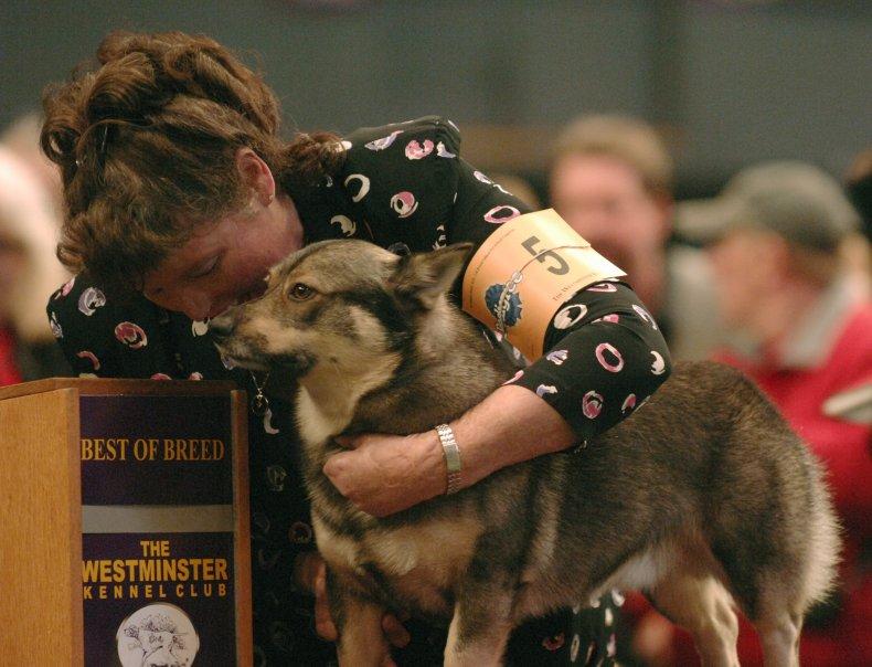 Swedish vallhund NYC dog show 2008