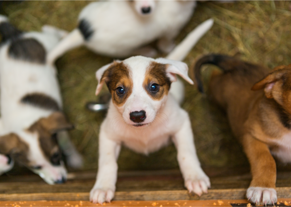 50 major milestones from the history of dogs