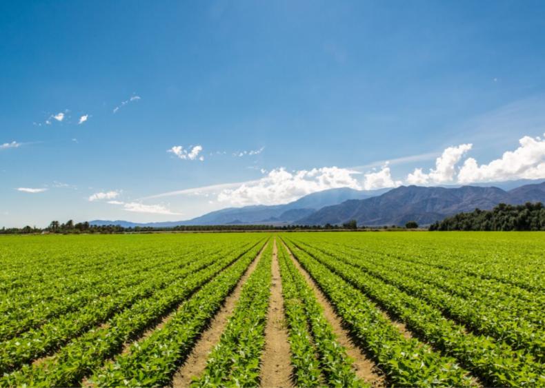 California farms 20% of America's organic land