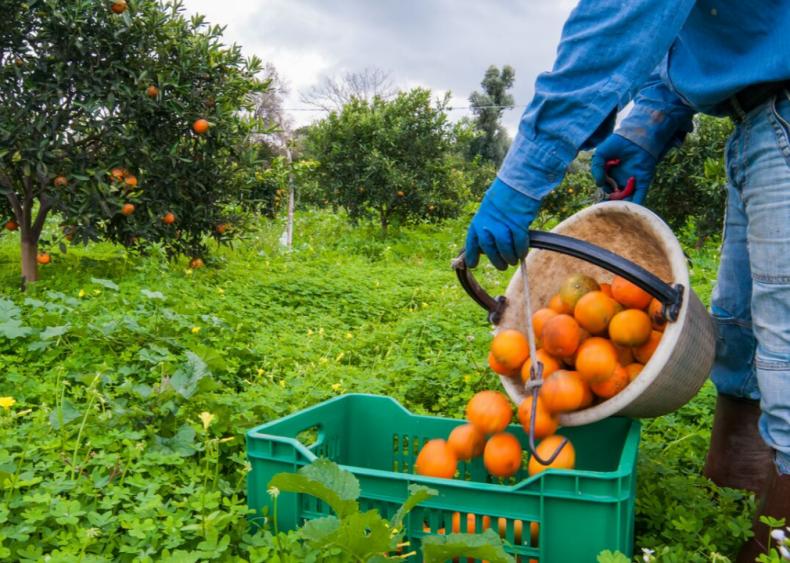 Farming provides millions of American jobs