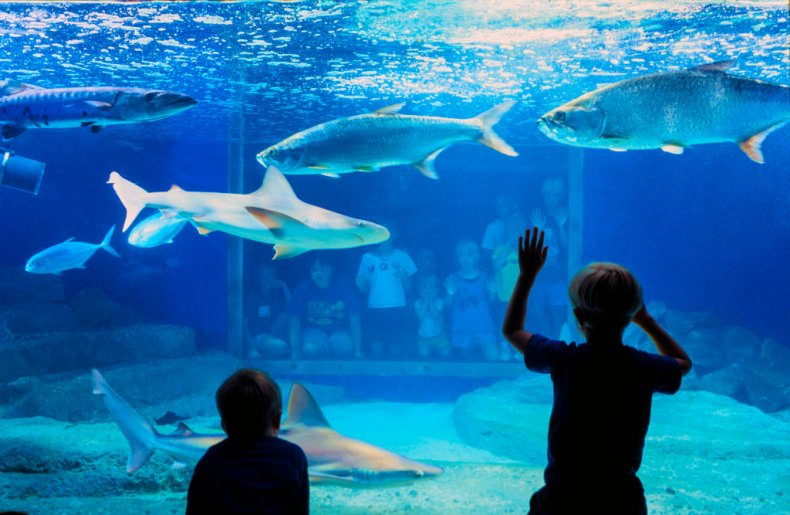Kids at an aquarium