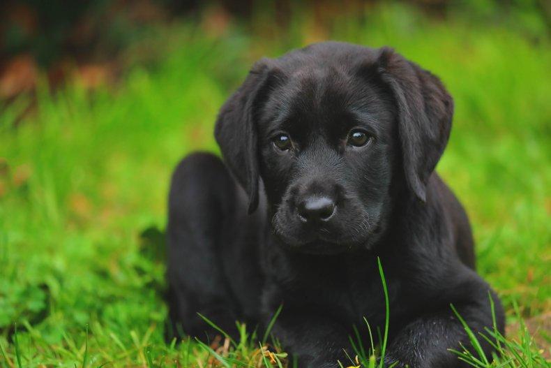 Carrie Herrera hero dog hoarder adopted Nebraska