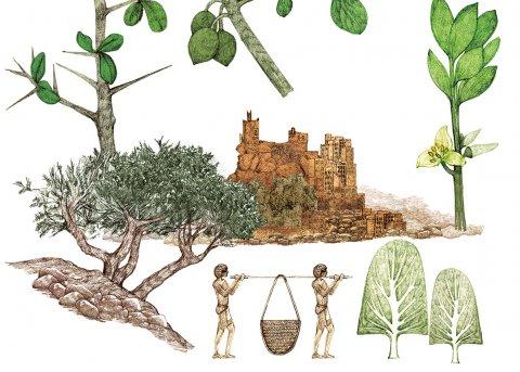 CUL_Map_Plants_Myrrh