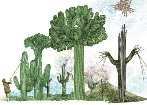 CUL_Map_Plants_Saguaro