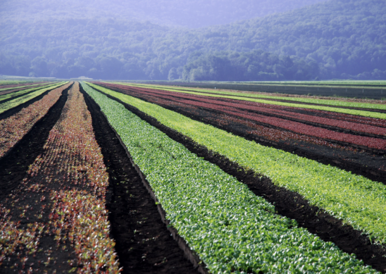 States with the biggest agriculture industry
