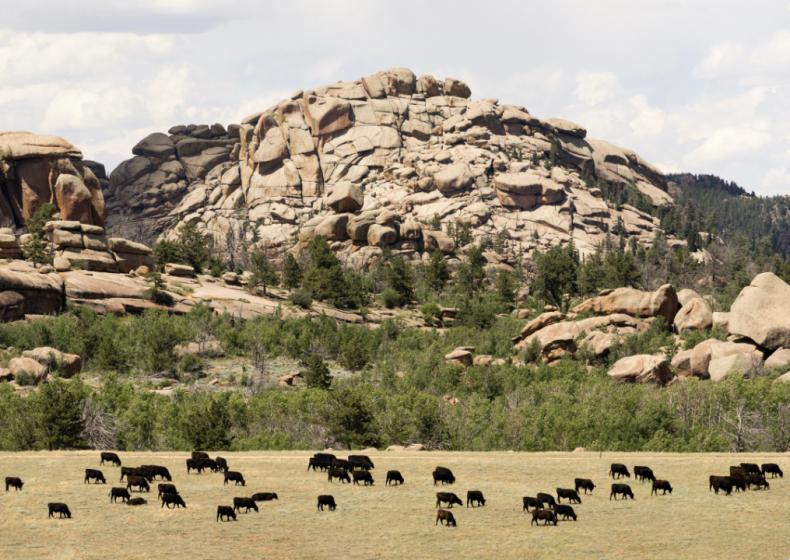 #38. Wyoming