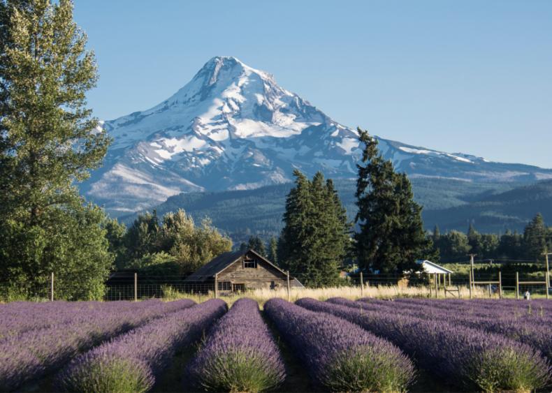 #28. Oregon