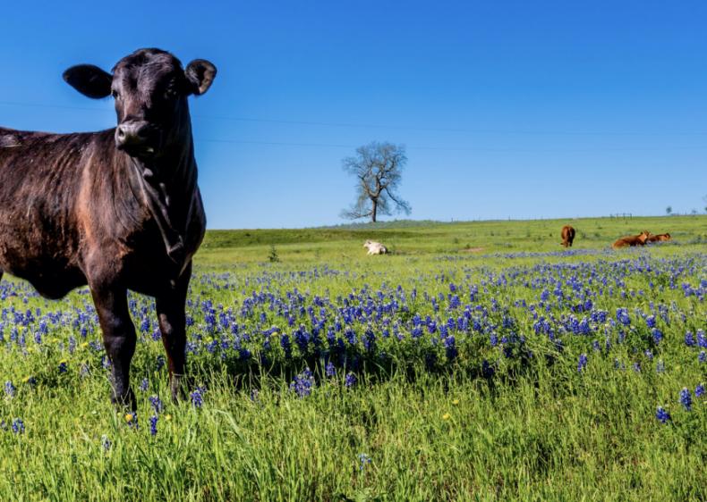 #3. Texas