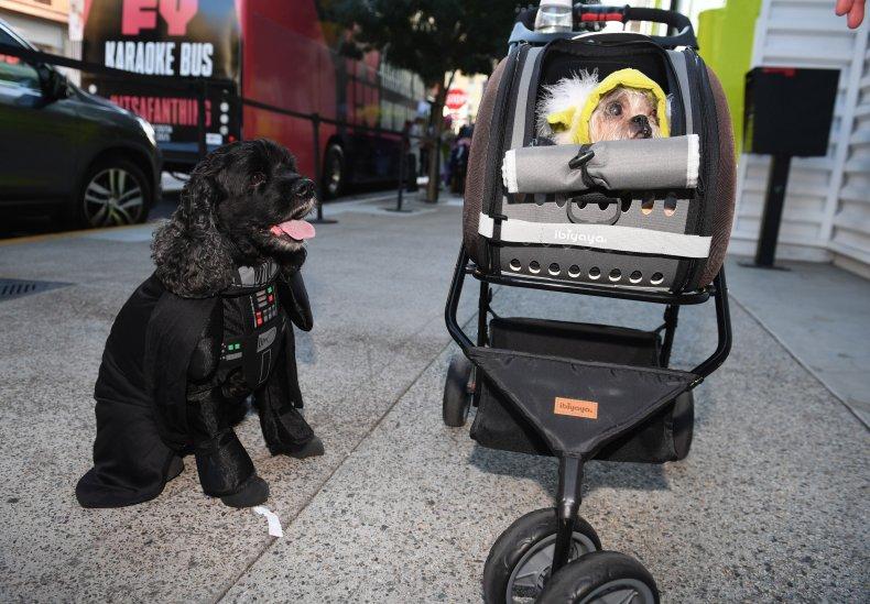 Darth Vader Dog Star Wars Mark Hamill