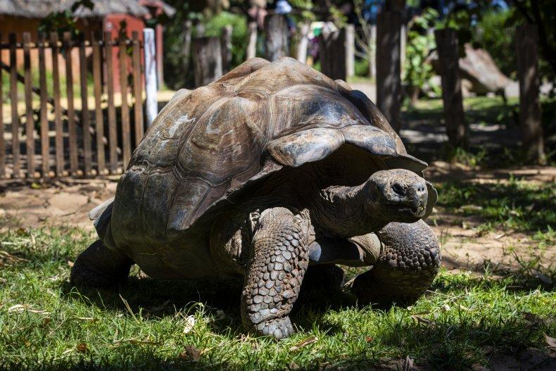 tortoise crawling around