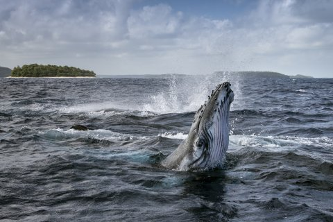 CUL_Secret Life of Whales_03