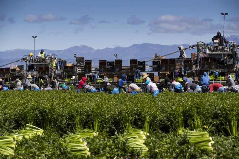 Agricultural workers in Oxnard, California