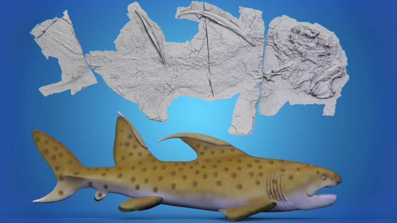 Shark fossil photo