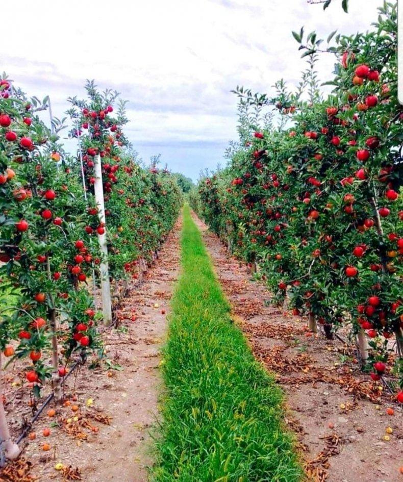 Minard's Family Farm orchard
