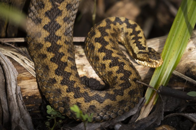 Stock photo of a snake.
