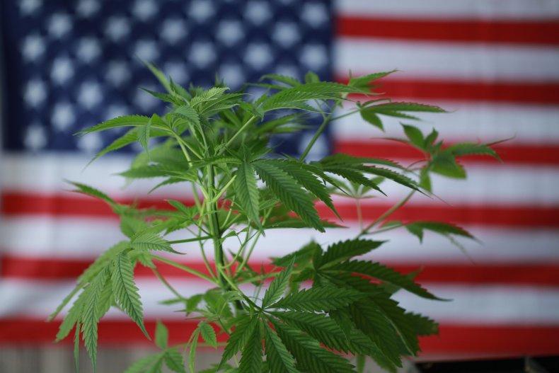 Marijuana Legalization Poll Democrats Congress Biden