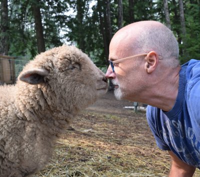 Dogs, rescue dogs, dog adoption, animals, farm