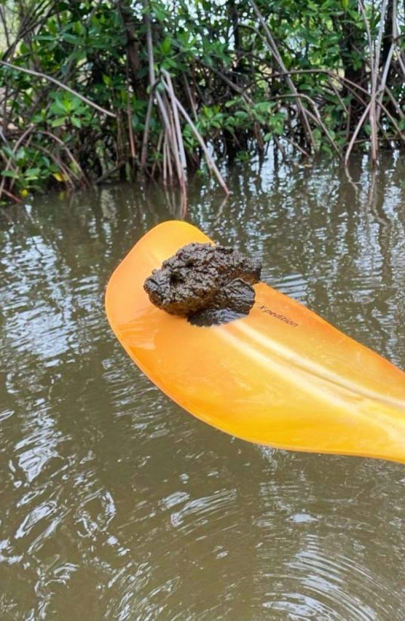 Stonefish on paddle