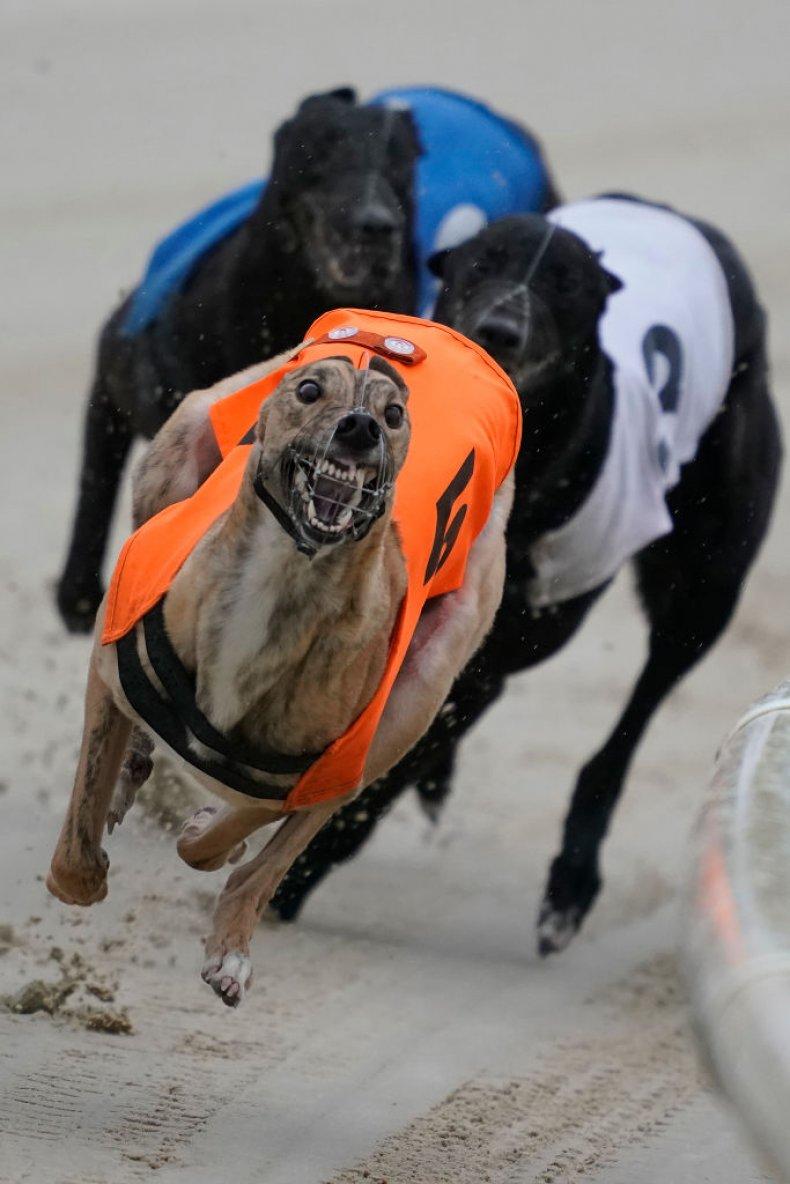 Greyhound wins race on methamphetamine