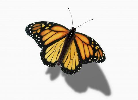 CUL_Map_Migrations_monarch butterfly
