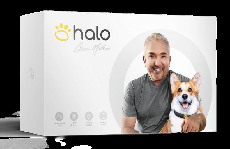 How to Train Dog Using Halo Collar