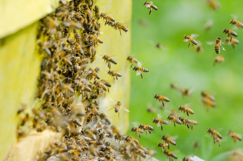 texas bee attack, bees, stock, getty