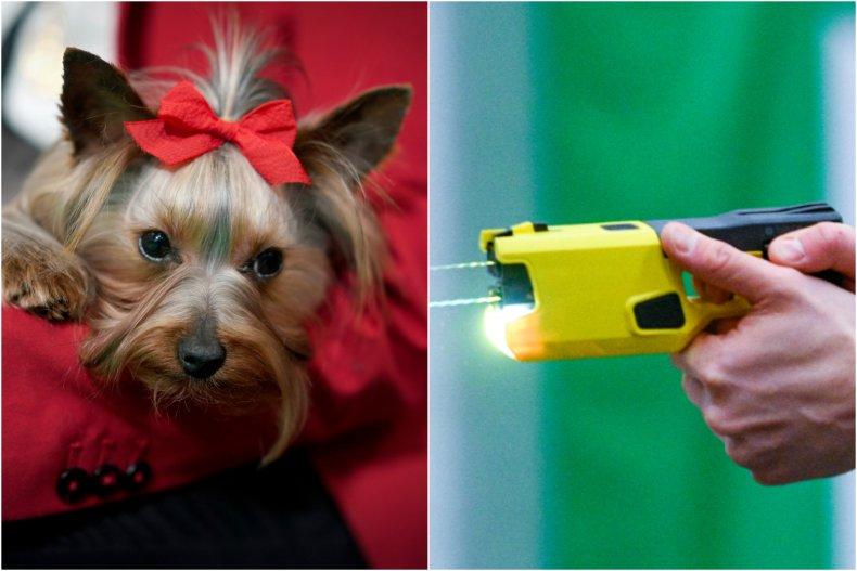 Dog taser