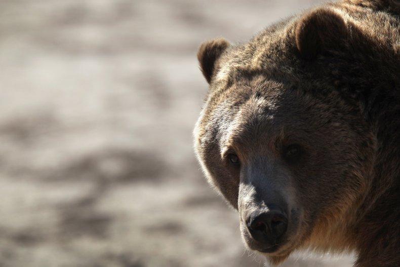 Woman killed in rare Colorado bear attack
