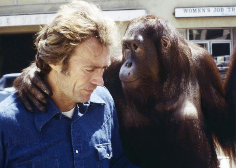 1978: Comedy with an orangutan costar