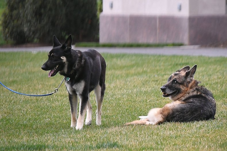 biden dogs champ major biting