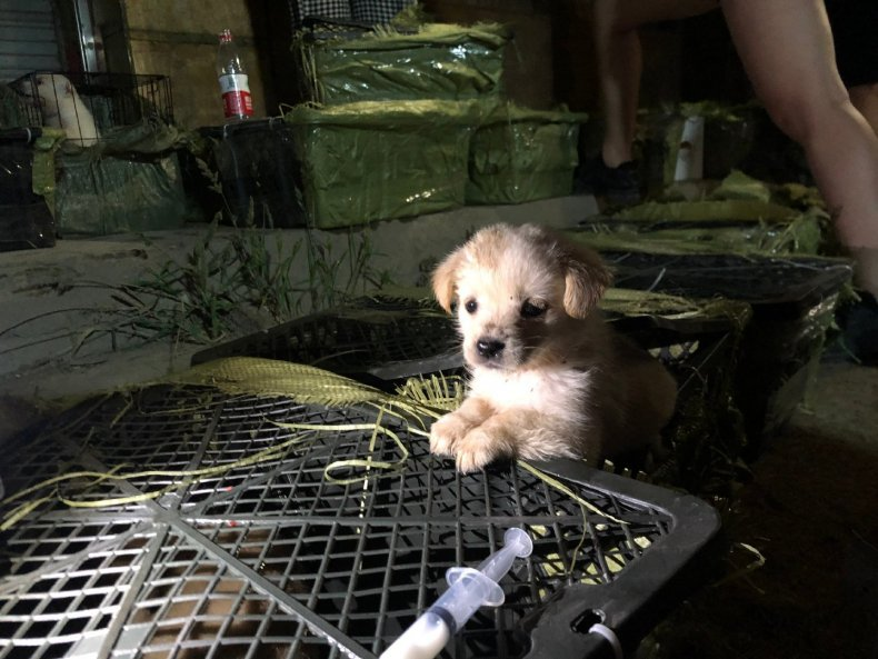 Animal Volunteers Rescue Suffocating Puppies And Kittens