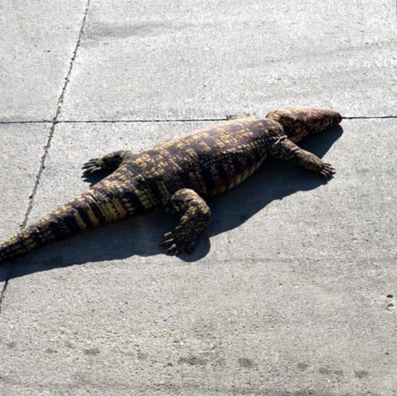 Alligator Plush Toy