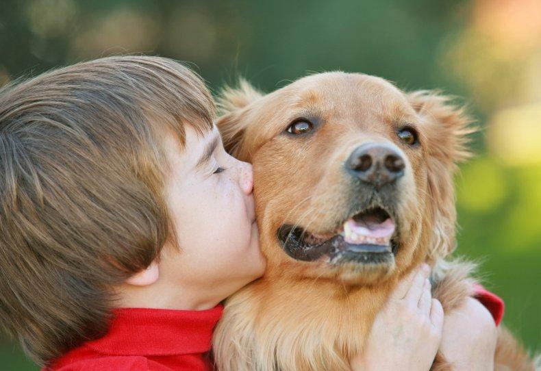 golden retrievers comfort animal sick children hospitals