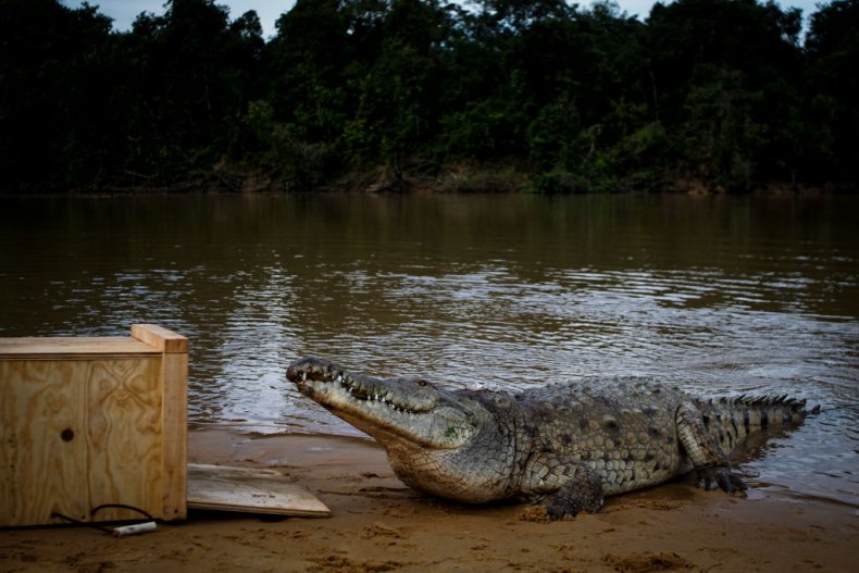 Stock photo of a crocodile